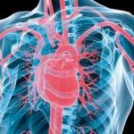 Maladies-cardiovasculaires