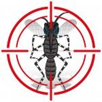 Un anti-moustique écologique pour lutter contre Zika