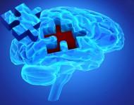 Lire la suite de Schizophrénie : l'importance d'une prise en charge précoce