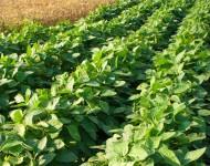 Lire la suite de Pourquoi le soja est un aliment plébiscité