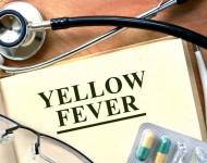 Lire la suite de Le Brésil en alerte face à l'expansion de la fièvre jaune