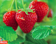 Lire la suite de Le fruit, ce régal indispensable…