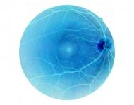 Lire la suite de Un traitement prometteur contre la dégénérescence maculaire