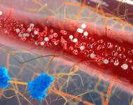Lire la suite de Bactéries intestinales : gare à l'alimentation déséquilibrée