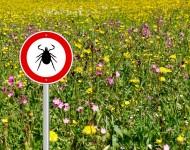 Lire la suite de Maladie de Lyme : déjà 20 000 téléchargements pour l'appli