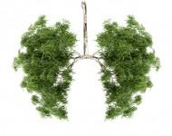 Lire la suite de BPCO et pollution atmosphérique : quels liens ?