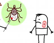 Lire la suite de Maladie de Lyme : l'essentiel vu par une spécialiste