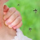 se débarrasser des moustiques avec un répulsif